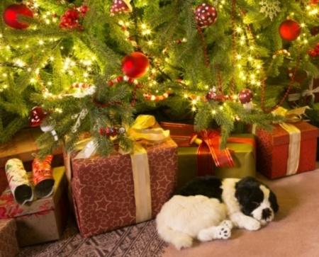 щенок в подарок под елкой