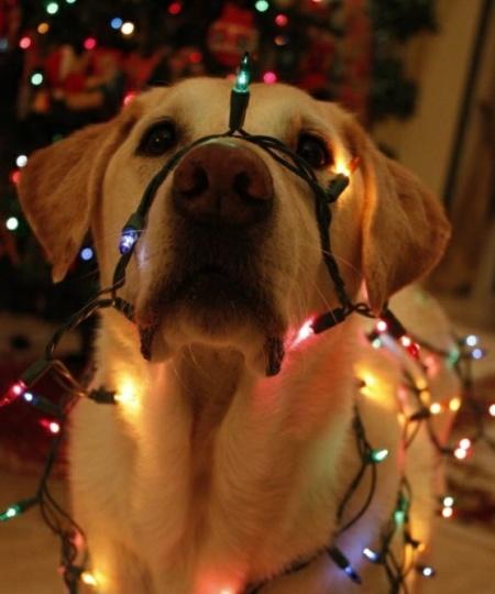 собака и елочная разноцветная гирлянда